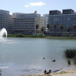 Location Local commercial Montpellier 305 m²