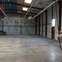 Location Local commercial Ramonville-Saint-Agne 1176 m²