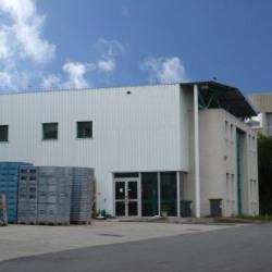 Vente Local d'activités Verrières-le-Buisson (91370)