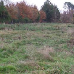 Terrain  de 1300 m²  Mios  (33380)