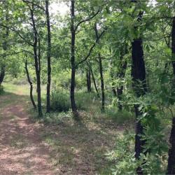 Vente Terrain Saint-Paul-en-Forêt 2800 m²