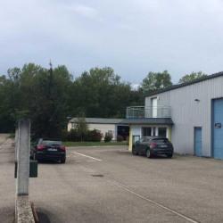 Location Local d'activités Bennwihr 226 m²