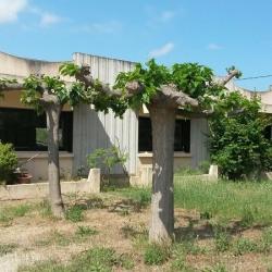 Location Entrepôt La Roquette-sur-Siagne 330 m²
