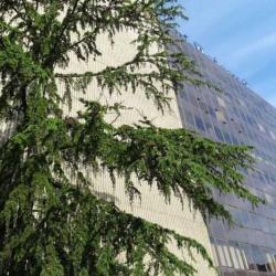 Location Bureau Boissy-Saint-Léger (94470)