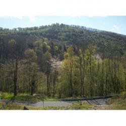 Vente Terrain Bourbach-le-Haut 0 m²