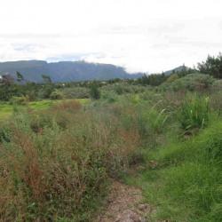 Vente Terrain La Plaine des Cafres 8250 m²