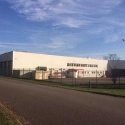 Location Local d'activités Bischwiller 3561 m²