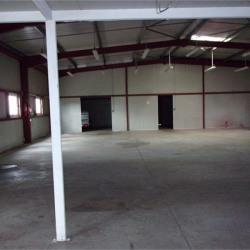 Vente Local commercial Villemur-sur-Tarn 700 m²
