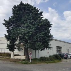 Location Local d'activités Portes-lès-Valence 1532 m²
