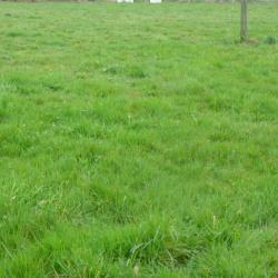 Terrain  de 1000 m²  Derval  (44590)