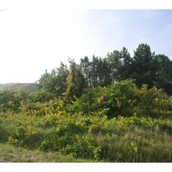 Vente Terrain Saint-Hilaire-de-Riez 1045 m²