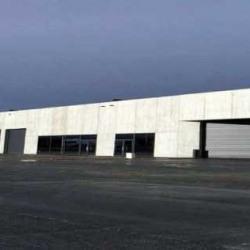 Location Local d'activités Lesquin 470 m²