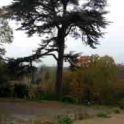 Terrain  de 182 m²  Wissous  (91320)