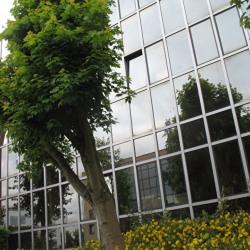 Vente Bureau Saint-Germain-en-Laye 270 m²