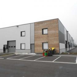 Location Local d'activités / Entrepôt Denain