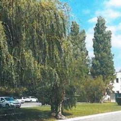 Location Bureau La Penne-sur-Huveaune 938 m²