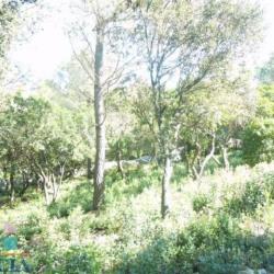 Vente Terrain Nîmes 3033 m²