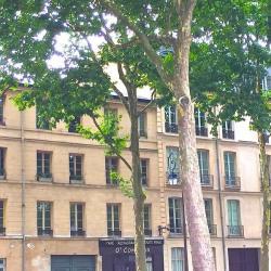 Location Bureau Versailles 136 m²