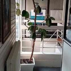 Vente Bureau Gentilly 664 m²