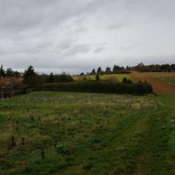 Terrain  de 400 m²  Marcy  (69480)