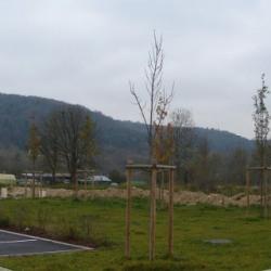 Terrain  de 650 m²  Bar-sur-Aube  (10200)