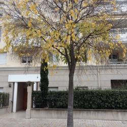 Location Local commercial Cagnes-sur-Mer 50 m²