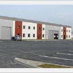 Location Local d'activités Dagneux 603 m²