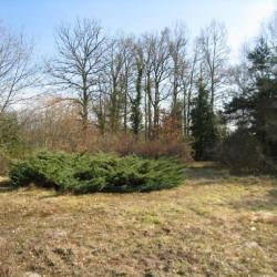 Vente Terrain Saint-Ouen-en-Belin 6040 m²