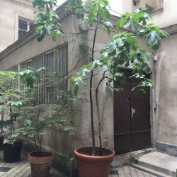 Location Bureau Paris 9ème 109 m²