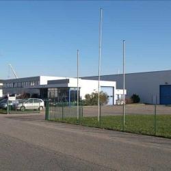 Vente Entrepôt Hœrdt 4056 m²