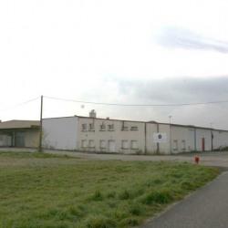 Vente Entrepôt Soufflenheim 5800 m²