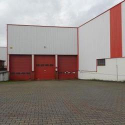 Vente Local d'activités Wittisheim 11445 m²