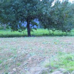 Vente Terrain Quincampoix 1125 m²