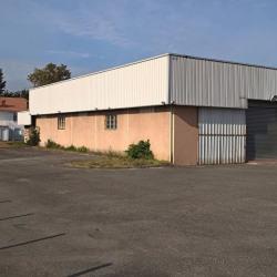 Vente Local d'activités Fenouillet (31150)