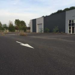 Location Local d'activités Haguenau 725 m²