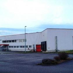 Vente Entrepôt Bischwiller 3561 m²