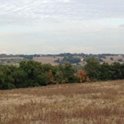 Vente Terrain Montrabé (31850)