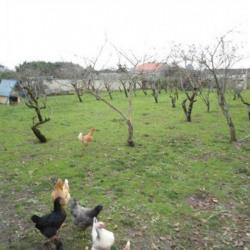 Terrain  de 291 m²  Tonnay-Charente  (17430)