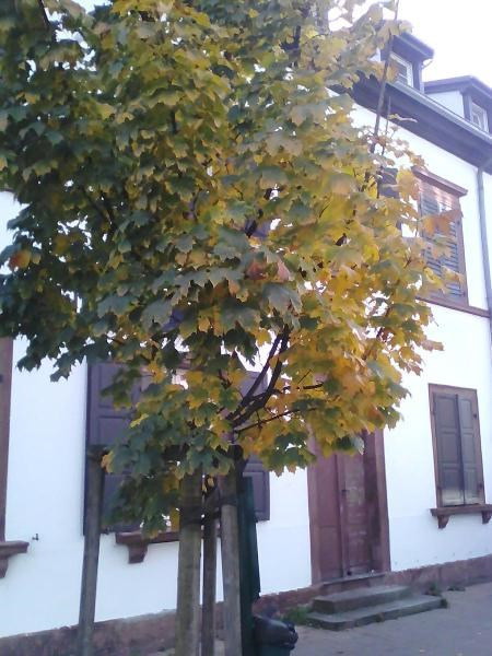 Venta  apartamento Bischwiller 85951€ - Fotografía 2