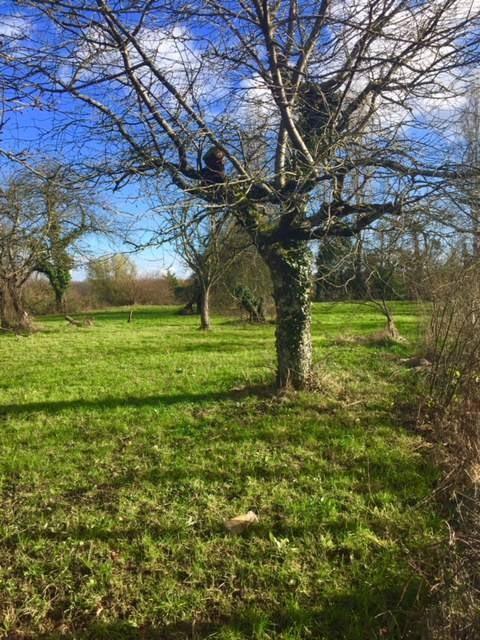 Vente terrain La genete 40000€ - Photo 1