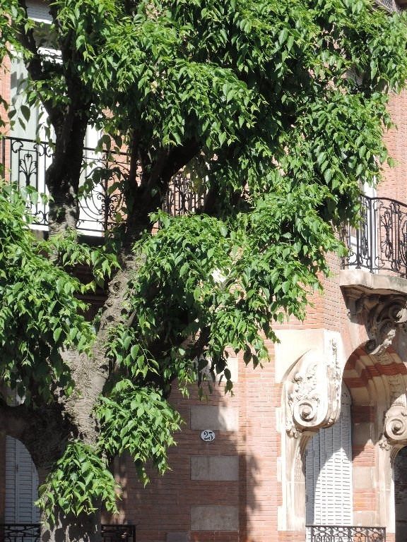 Sale apartment Toulouse 210000€ - Picture 1