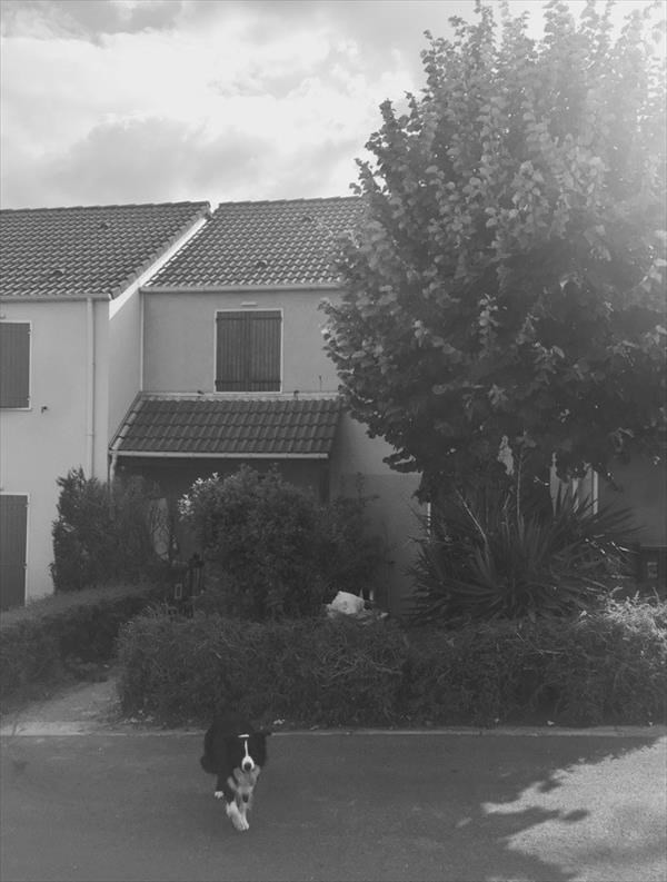 Location maison / villa Houilles 1600€ CC - Photo 1