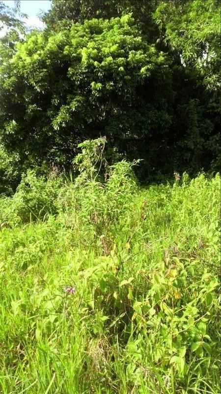 Vente terrain Ste rose 140000€ - Photo 1