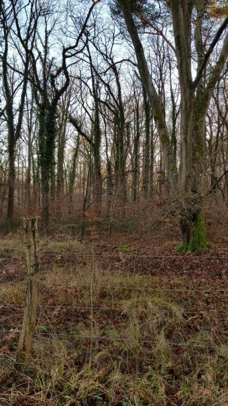 Vente terrain Montigny-sur-loing 130000€ - Photo 3