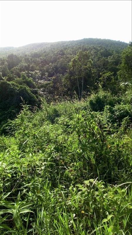 Vente terrain Ste rose 140000€ - Photo 2
