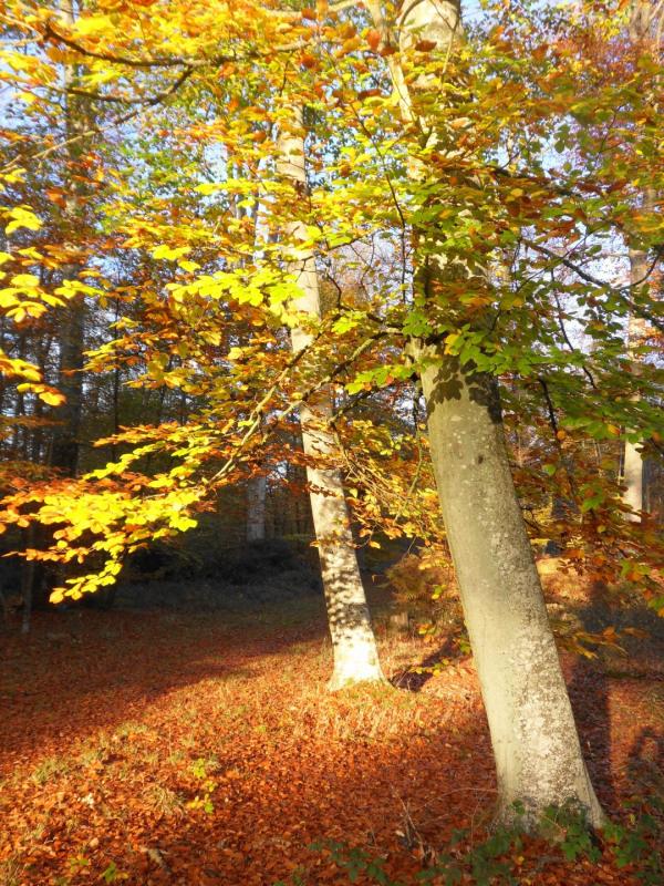 Vente terrain Montigny-sur-loing 130000€ - Photo 1