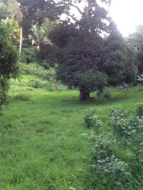 Vente terrain Le gosier 255000€ - Photo 4