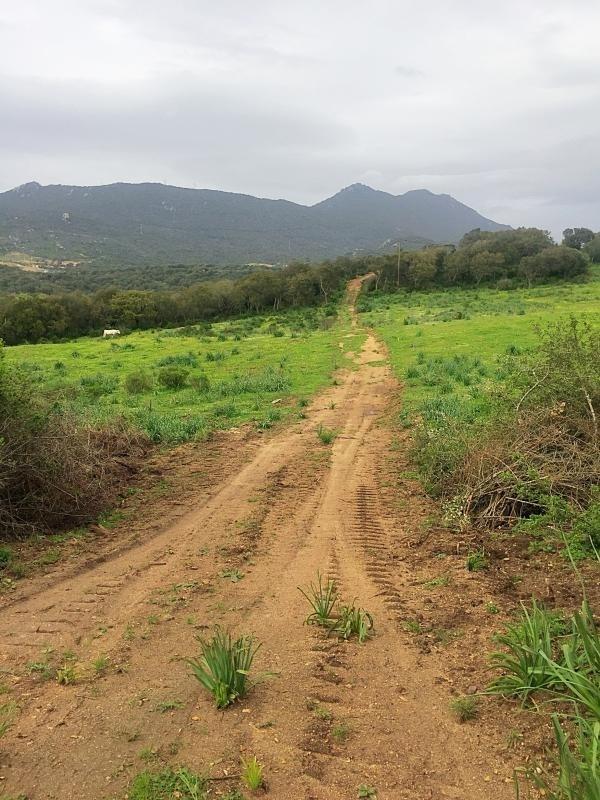 Vente terrain Sartene 109000€ - Photo 6