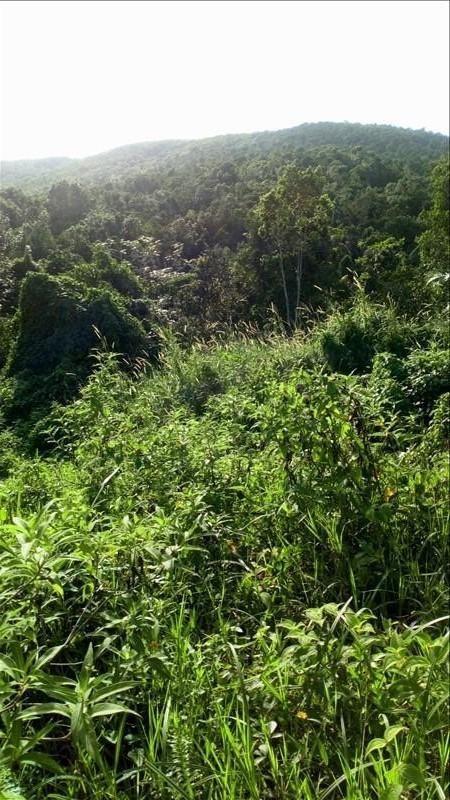 Vente terrain Ste rose 140000€ - Photo 3