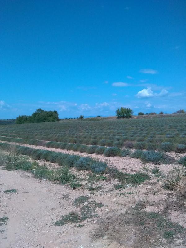 Terrain  de 1140 m² Valensole par LES MAISONS NATILIA